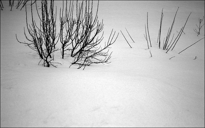 spring\'11 #04