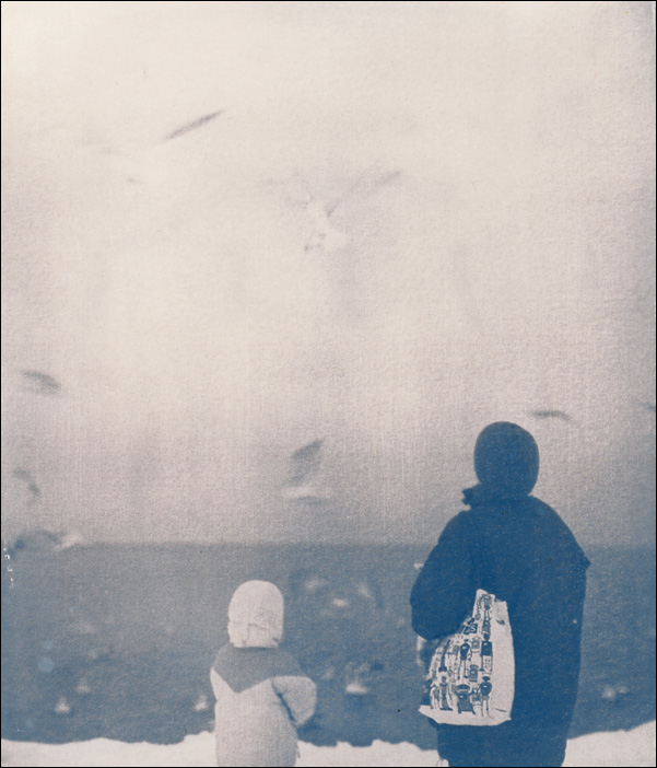 Seagulls. Cyano
