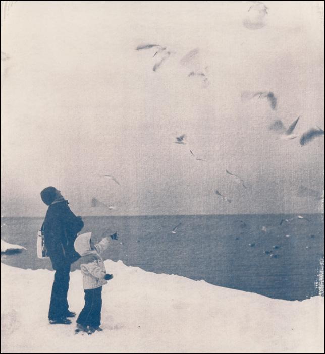Seagulls. Cyano #2