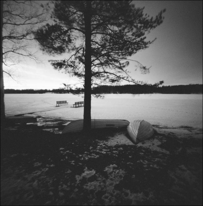 дерево посередине